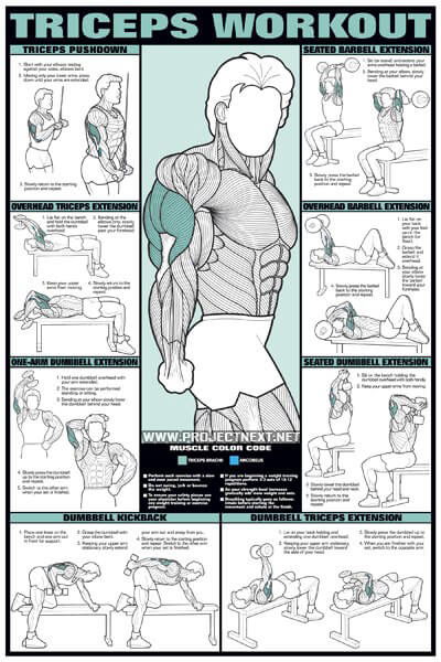 Triceps Workout for Men - Barbell Dumbbell Seated Exercise Gym - Yeah ...