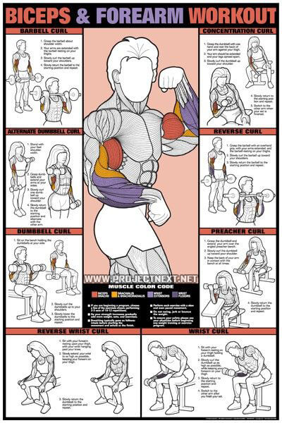 how to develop biceps with dumbbells