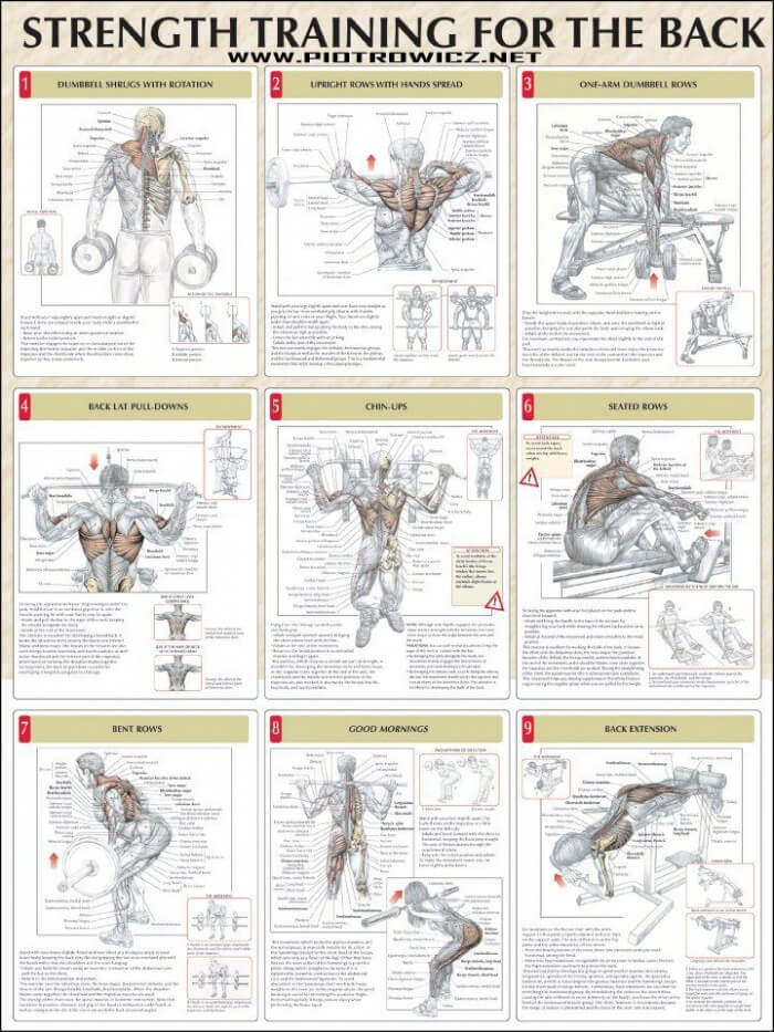 Strength Training For The Back - Fitness Healthy Exercise ...