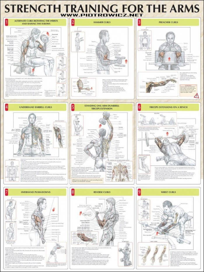 Strength Training For The Arms - Fitness Healthy Exercise Gym
