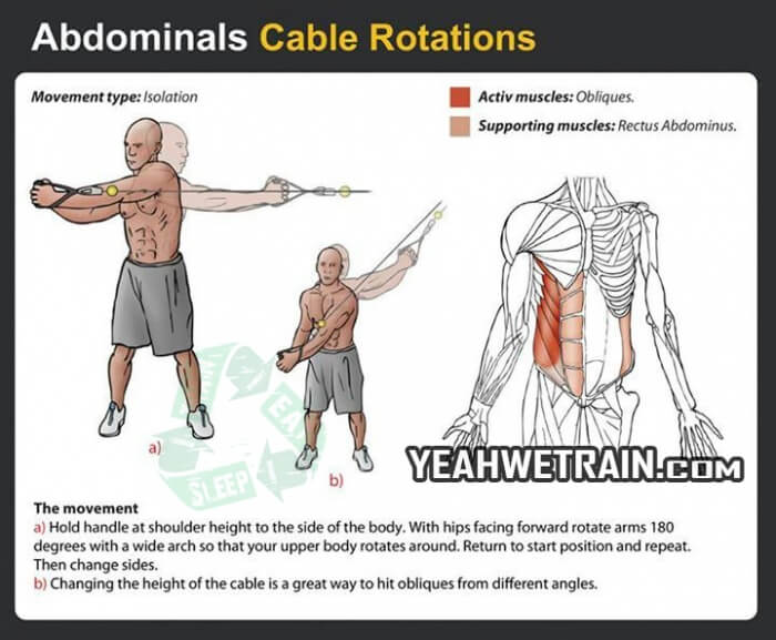 Abdominals Cable Rotations - Fitness Exercise Healthy Gym