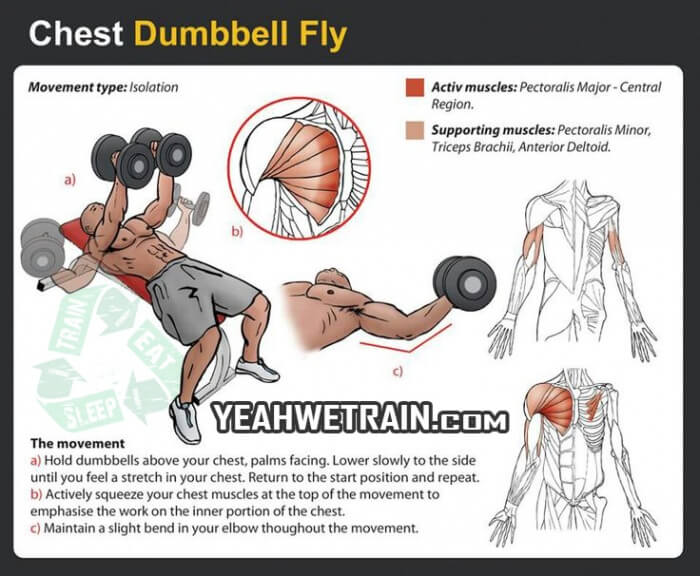 Chest Dumbbell Fly - Fitness Exercise Healthy Sixpack Gym