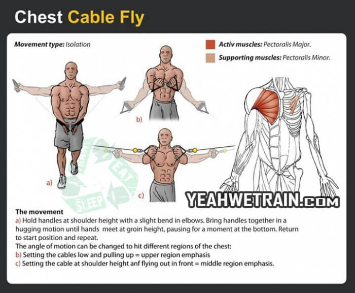 Chest Cable Fly - Fitness Exercise Healthy Sixpack Gym