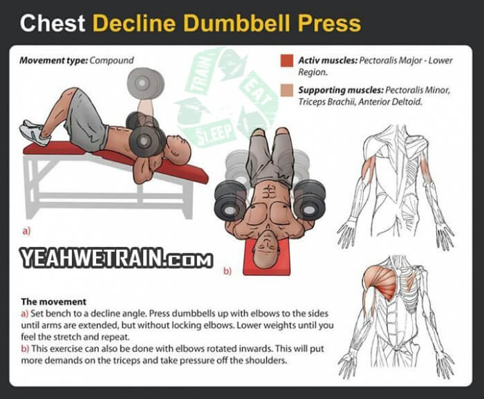 Chest Decline Dumbbell Press Fitness Exercise Sixpack Gym