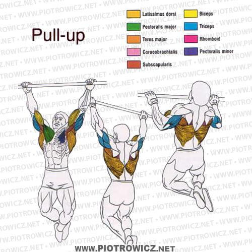 Pull Up Exercise Latissimus Triceps Biceps Workout Gym Healthy