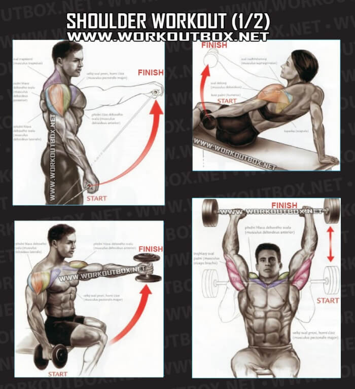 Shoulder Workout Part 1 - Healthy Fitness Exercises Gym Back