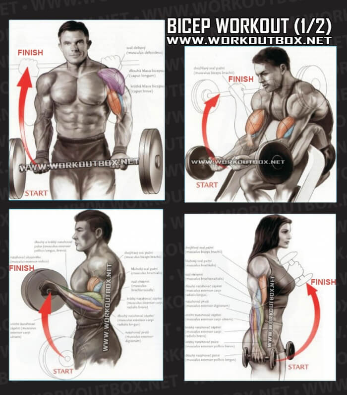 Gallery For > Bicep Workout Exercises