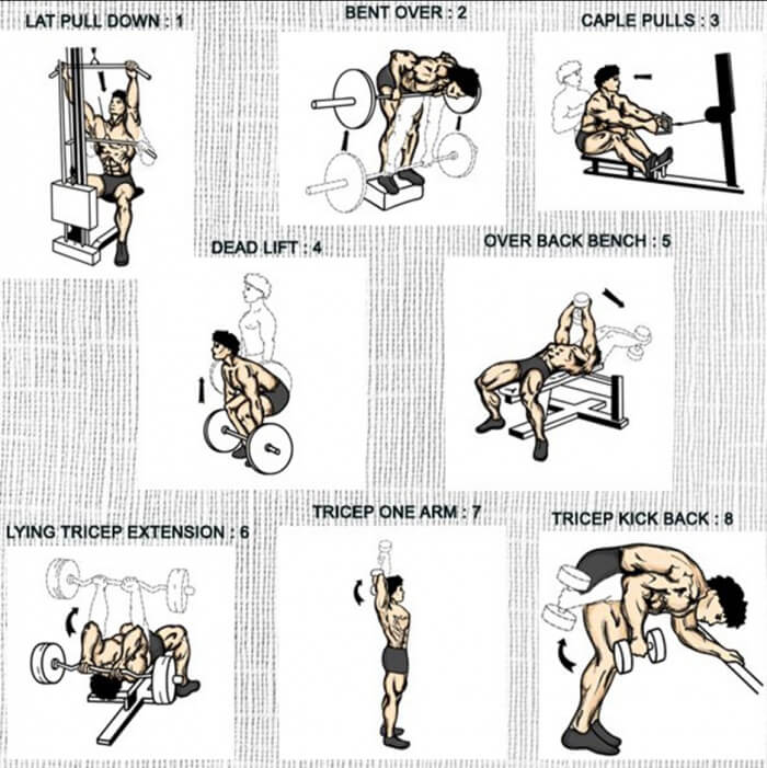 Back And Triceps Exercises - Healthy Fitness Training ...