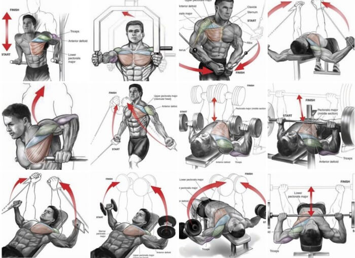 Chest Expert Workout Plan - Healthy Fitness Exercises