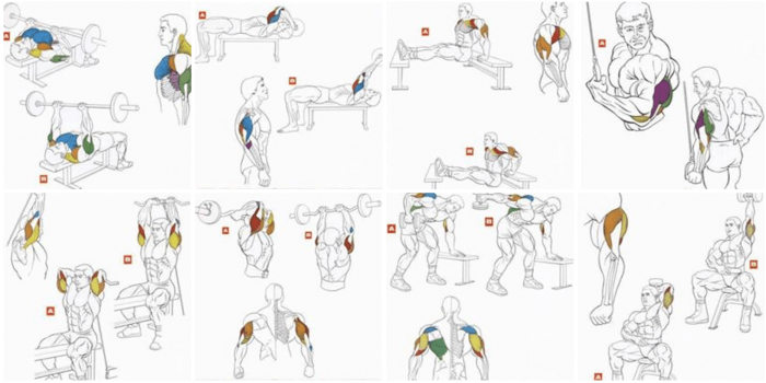 Triceps Workout Level 9000 Best Arm Exercises Training Body Back