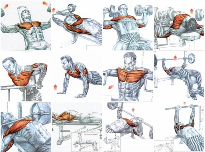 Best Of Chest Exercises - Healthy Fitness Training Plan For Body