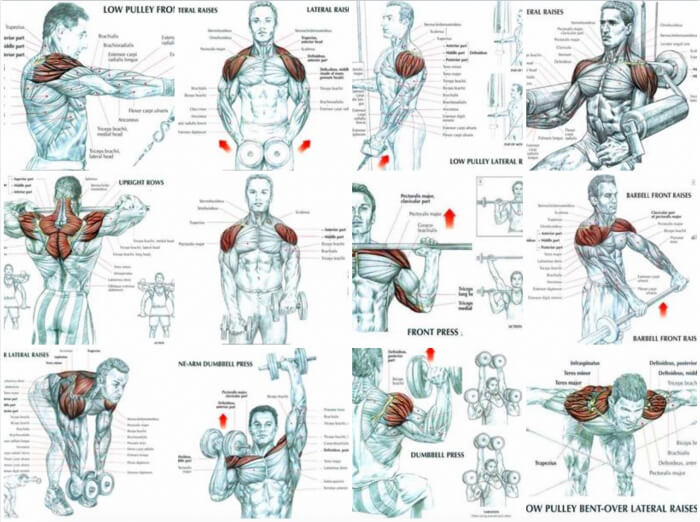 Best Of Shoulder Exercises - Healthy Fitness Training Plan