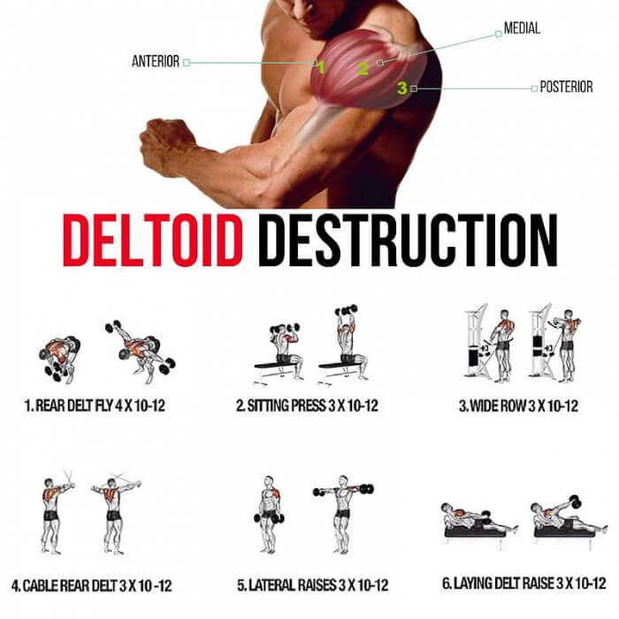 Deltoid Destruction! Shoulders Training Plan - Yeah We Train ...