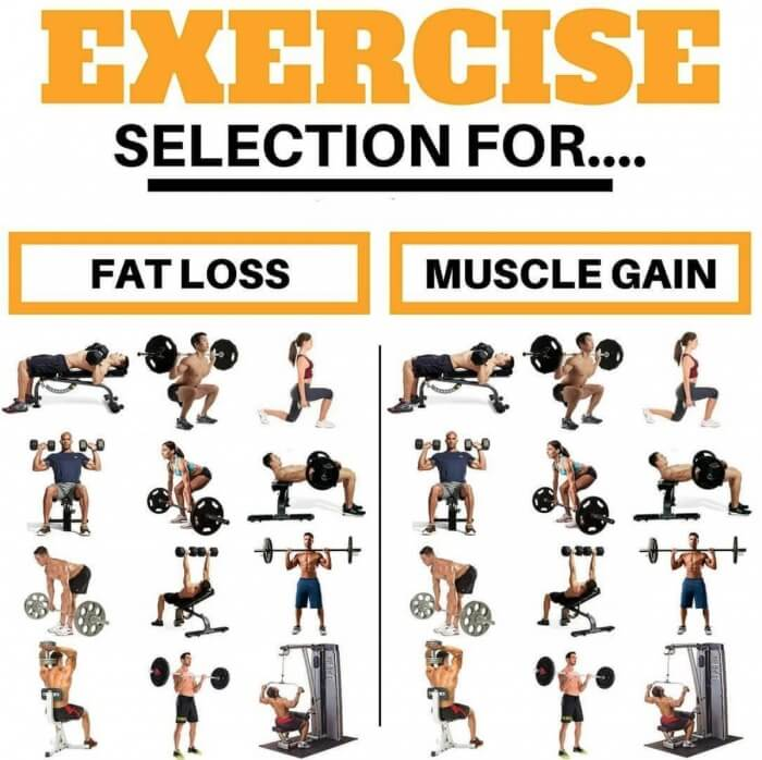 Exercise Selection For Fat Loss and Muscle Gain! Best Fit Tips
